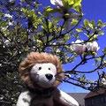 Frühling in Karlshorst