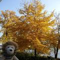 Im Park können wir noch einmal den Herbst bewundern und ...