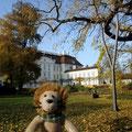 Der letzte Oktobertag - Sonne satt am Schloß Köpenick.