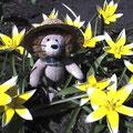 Mini-Leo als Gärtner