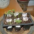 le jardin de nicole