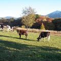 秋の放牧場と三倉山。