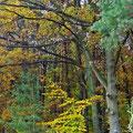 Herbst 2010 Oldendorf/Luhe, Foto: skb/29