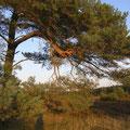 Foto: skb2009, Motiv in Lüneburger Heide
