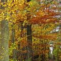 bei Oldendorf, Lüneburger Heide, Herbst 2010