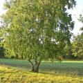 Foto: skb2012, Amelinghausen, Kronsbergheide im Oktober