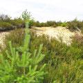 Schwindebecker Heide am 23.07.2015, Foto: ©skb