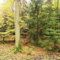 Naturschutzpark Lüneburger Heide/ Im FriedWald. Foto: ©skb2015