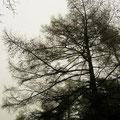 Winter -Nebeltag 22.01.2011 im Naturpark Lüneburger Heide bei Undeloh