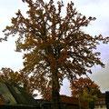 Amelinghausen, Lüneburger Heide, Herbst 2010