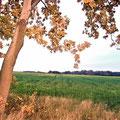 bei Putensen, Lüneburger Heide, Herbst 2010