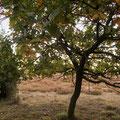 Foto: skb2009, im Naturpark Lüneburger Heide