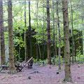 Im sog. Mauerwald