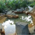 Heiße Quellen im Arenal Paraiso Resort