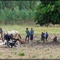 Gefühlt passt halb Äthiopien auf Ziegen, Rinder, Esel und Schafe auf