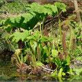 Lost Garden of Heligans