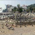 Öffentlicher Taubenfütterungsplatz