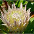 Blüte im botanischen Garten