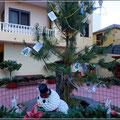 Kanarischer Weihnachtsbaum