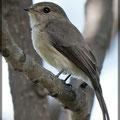 Vogelwelt Äthiopiens