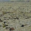 Eines von vielen Lavafeldern