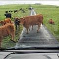 Schottischer Verkehrsstau (Hupen hilft überhaupt nicht)