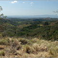 Immergrüne Landschaft