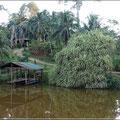 Mitten im Regenwald, die Laguna del Lagarto Lodge