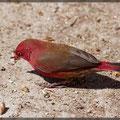 Äthiopiens Vogelwelt