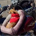 Harleybraut mal ganz anders