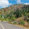 Landschaft an der Straße zum Mount St. Helens