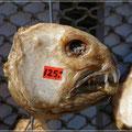 Fischköpfe kosten nur rund 15 Euro (!!)