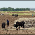 Auch die Landwirtschaft kommt (noch) fast ohne Technik aus