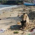 Der Strand befand sich in einem saumäßigen Zustand