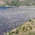 Hunderttausende Bäume schwimmen allein in diesem See