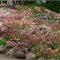 Botanischer Garten, Hauptsache bunt