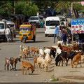 Auch Kühe, Ziegen und Rinder nutzen die Straßen