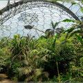 In der Tropenkuppel