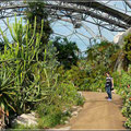 Mediterrane Pflanzenwelt
