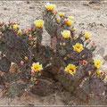 Blütezeit in der Wüste