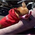 """Der kleine Hund fühlte sich sichtlich wohl in seinem """"Beifahrerkorb"""""""
