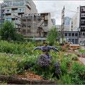 Community-Garden in Vancouver