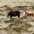 Dartmoor Pferde/Ponys