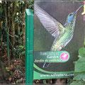 Kolibrigarten bei Monteverde