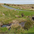 Fahrt durch das Dartmoor