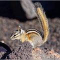 Ob das Hörnchen den gefundenen Handschuh als Winterquartier nutzt?