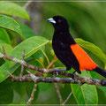 Vogelwelt Costa Ricas