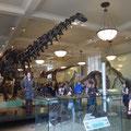 Anne unter den Dinos