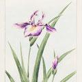 marie saiki papier peint peinture naturelle villefranche beaujolais lyon couleur violet