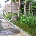 前庭と杉苔